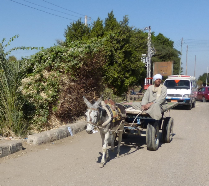 01 201412_22 Travel from Hurghada to Luxor-Man with Donkey cart